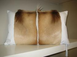 Cushion Springbok